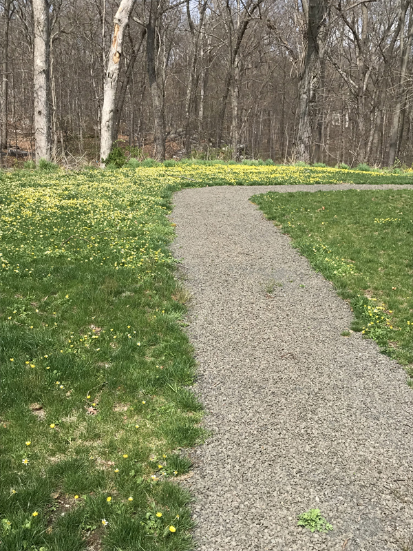 Nature Walkway Yellow Flowers April 2019 Web